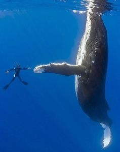 whale high five
