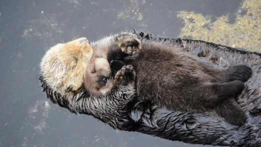 otterscuddle